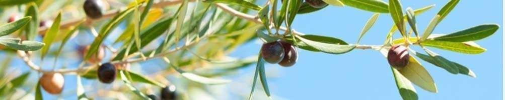 Huile d'olive - Éditions Limitées