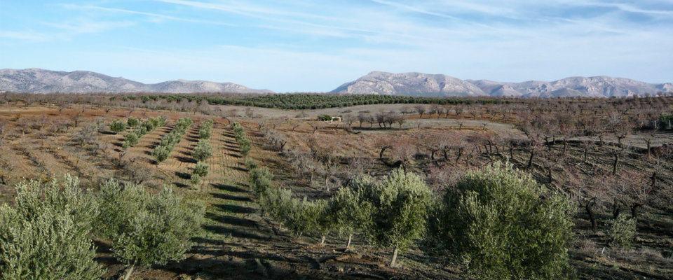 Olivenöl La Solana2