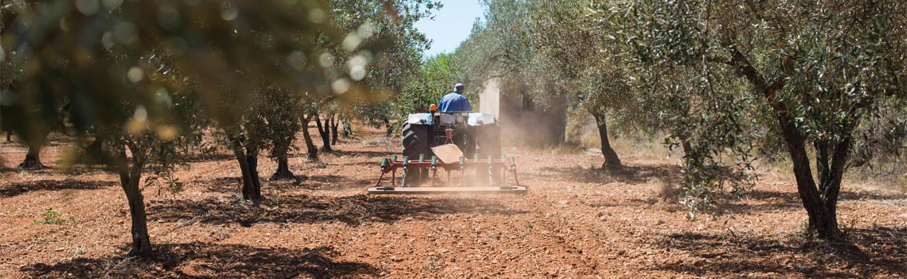 Olivenöl aus Spanien