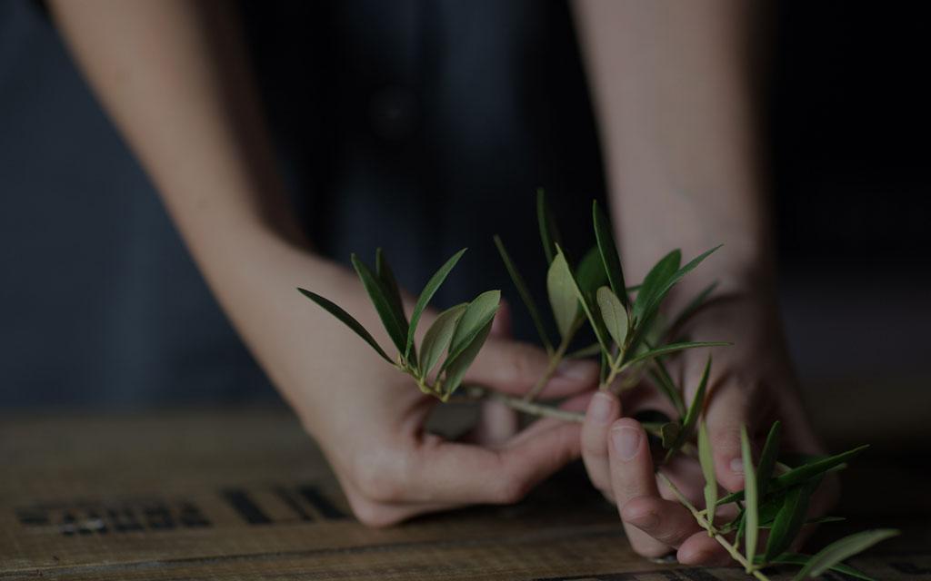 Olivenselektion von La Masrojana