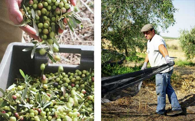 Marqués de Valdueza Olivenöl vom spanischen Adel