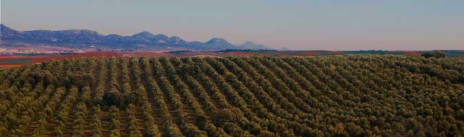 Marquez de Valdueza Olivenöl Herstellung in Jaen