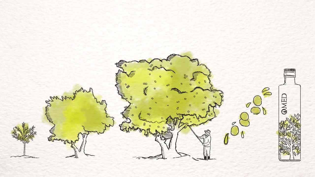 O-Med Olivenöl von der Olive zu feinstem Olivenöl