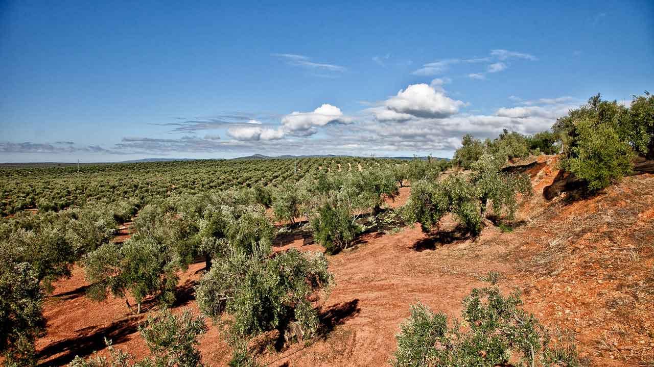 Oro Bailen Olivenöl