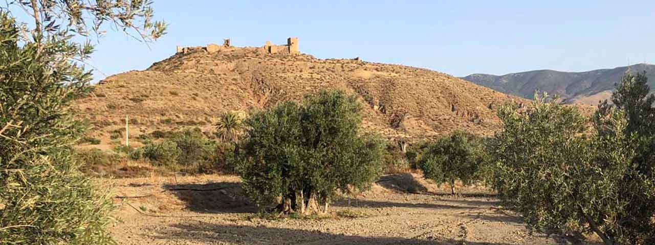 Oro del Desierto Bio Olivenöl