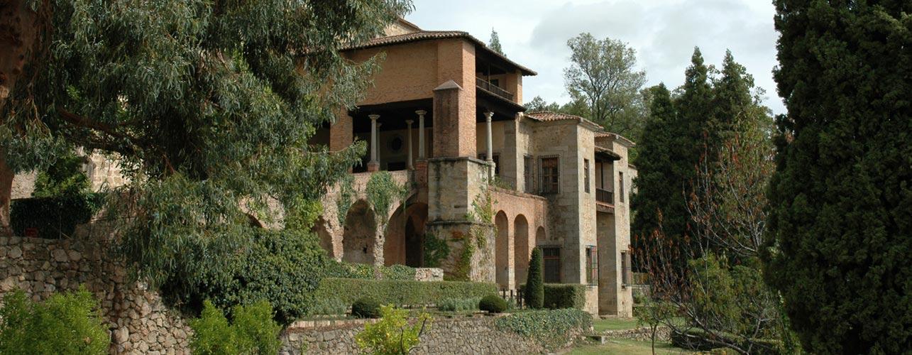 Pago Baldios San Carlos Olivenöl Hersteller aus Spanien