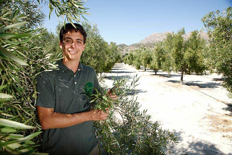 Señoríos de Relleu Olive Oil