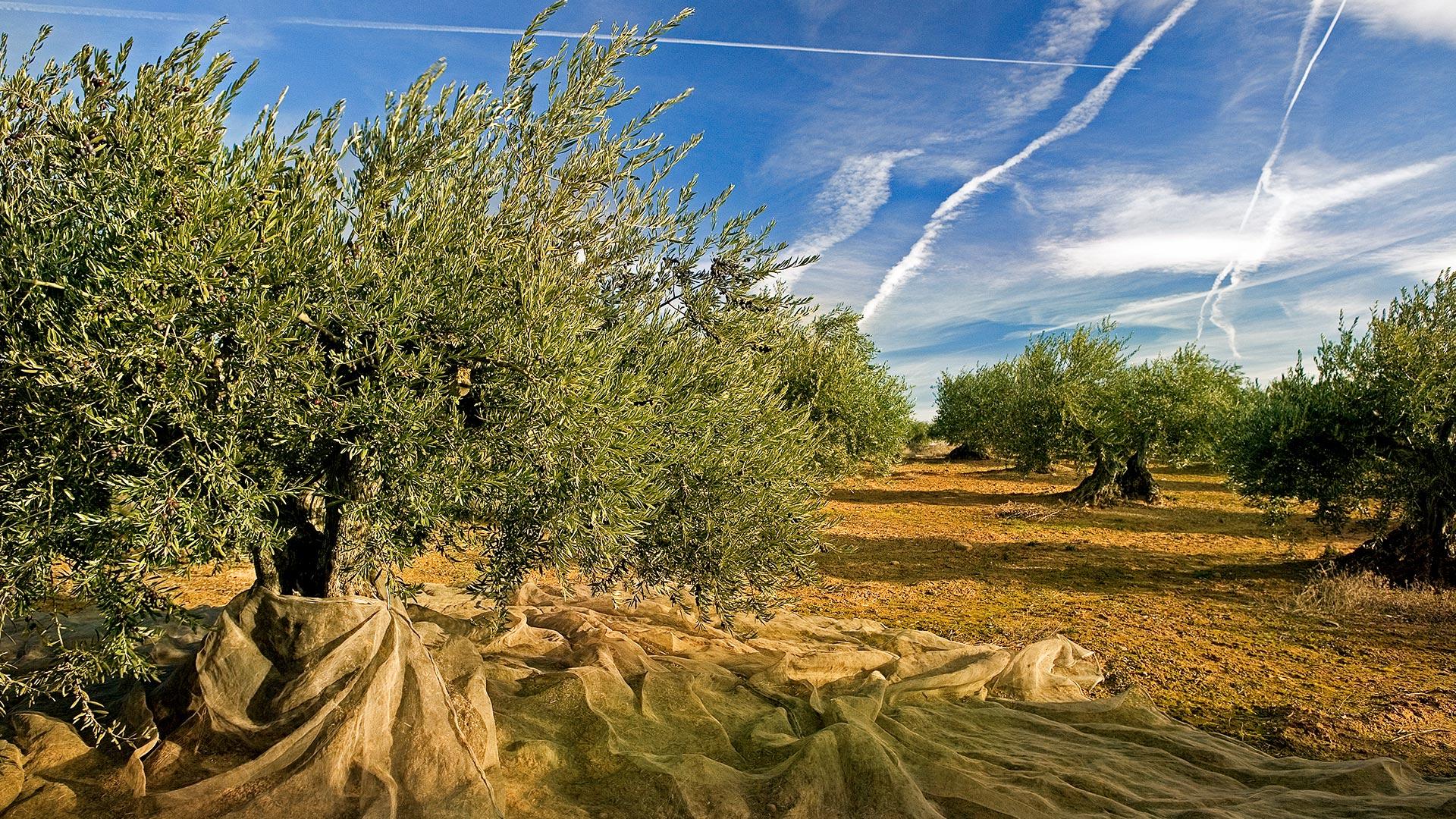 Trujal Mendia Olivenöl aus Navarra
