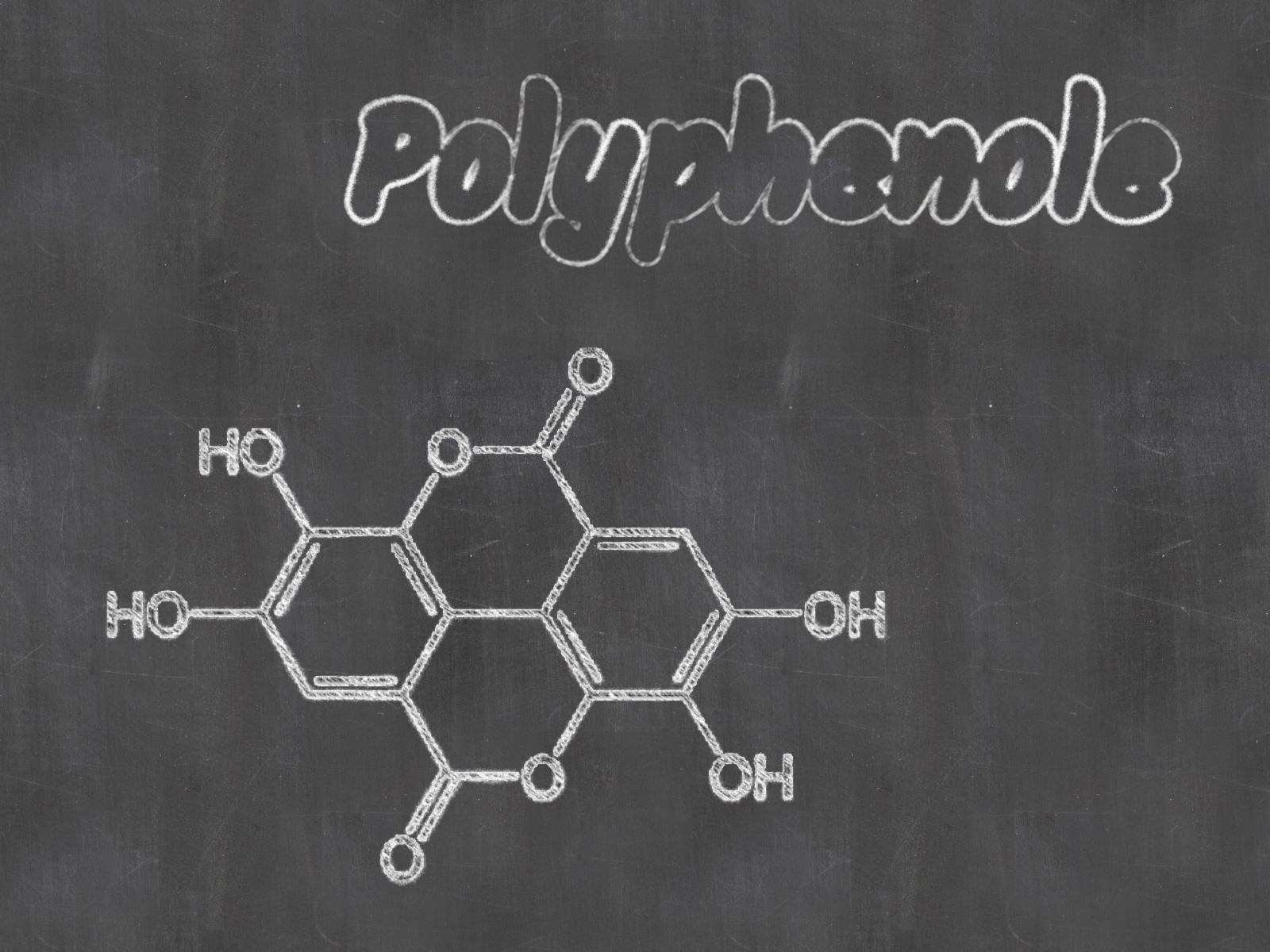 Polyphenole im Olivenöl